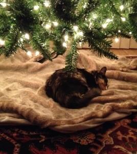 Olive under tree