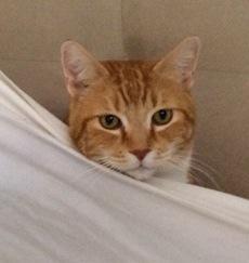Sam under sheet