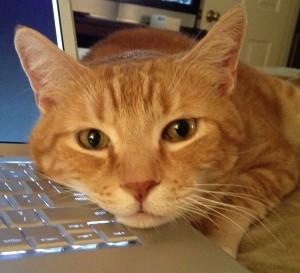 Sam on keyboard