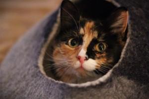Olive in hiding