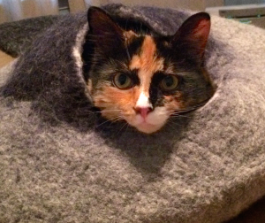Olive in cat cave