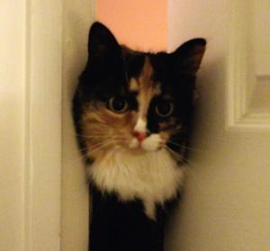 Olive in door