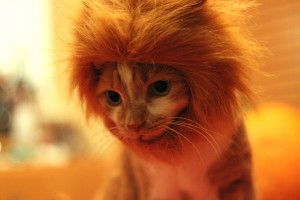 Lucy as lion
