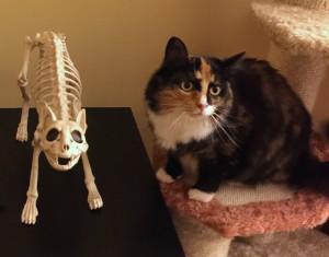 Olive with skeleton