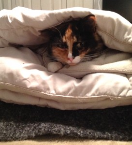 Olive in blankets