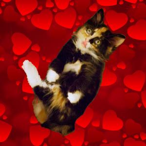 Valentine Olive