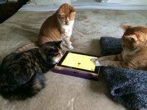 cats play game