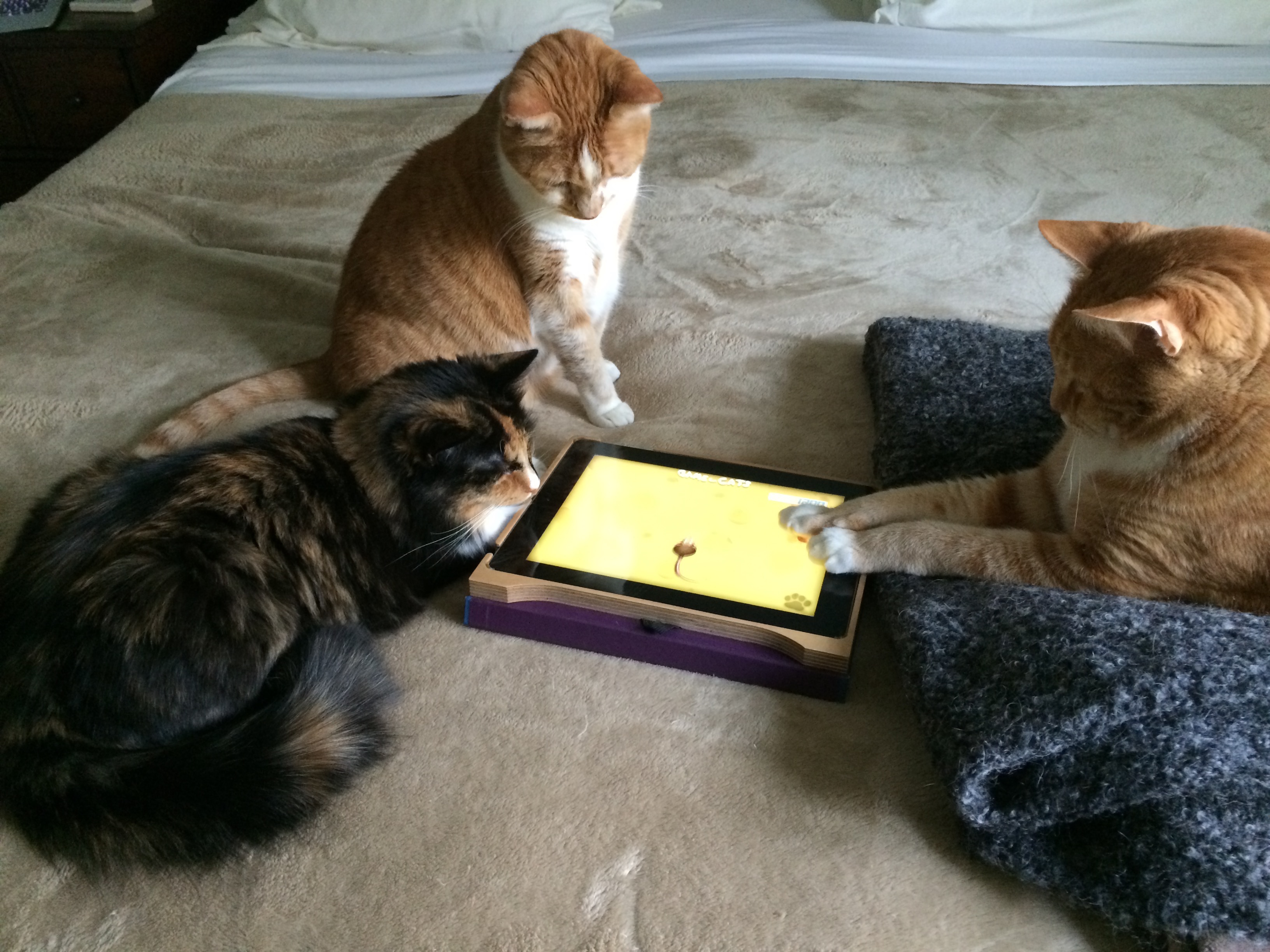 Cats Spiel
