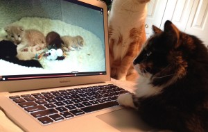 Olive watching kittens