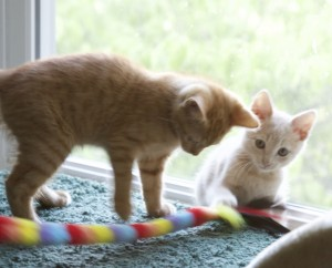 2 of 3 foster kittens