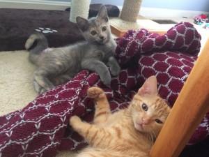 the third foster kitten is seen at last!