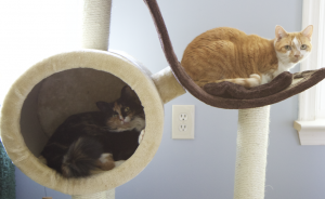 Olive Lucy cat tree