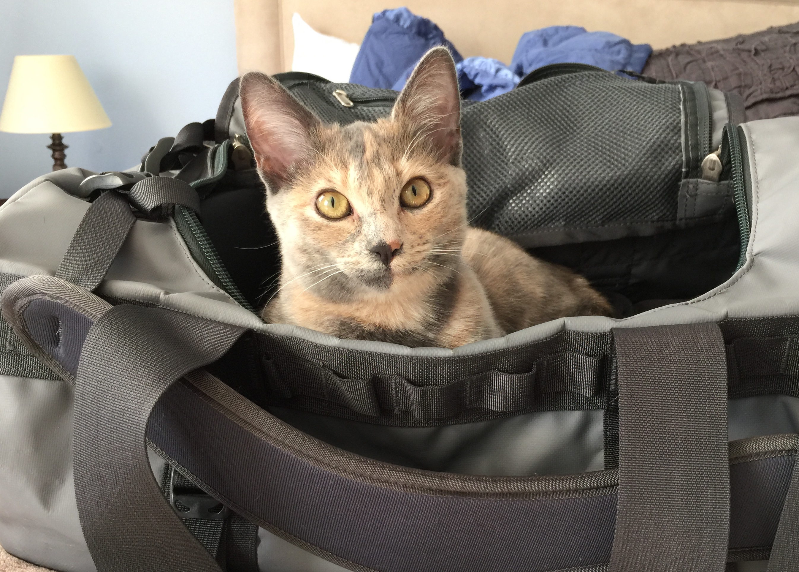 Eve in bag