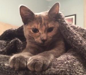 Eve under blanket
