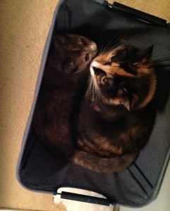 Olive and Eve in basket