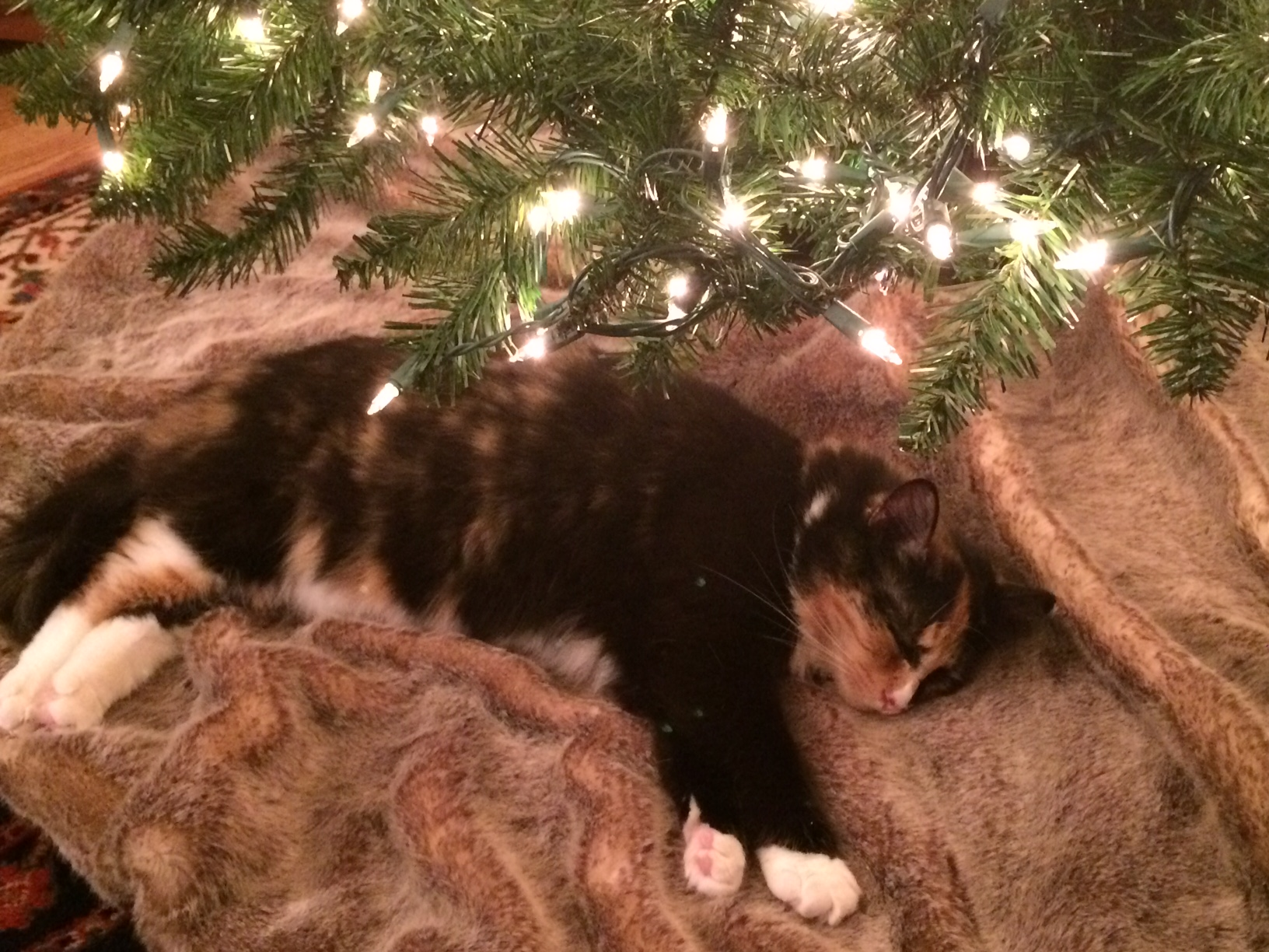 Olive under the tree