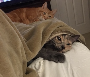 Sam and Eve in bed
