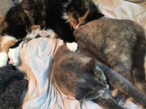 Olive sleeps with Eve