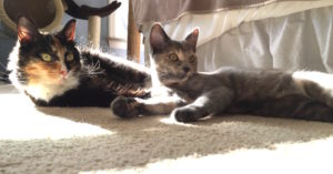 Olive and Eve in sun