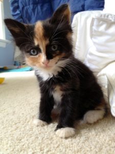 Olive as kitten