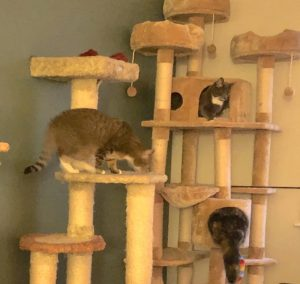 3 cats climbing in an enormous cat tree