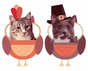 2 cats dressed as a pilgrim and turkey