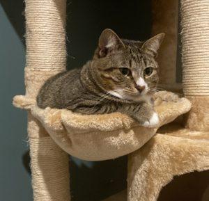 a cat in a hammock in a cat tree